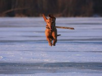bellini on ice